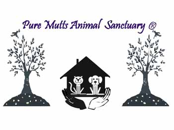 Pure Mutts Animal Sanctuary in Conroe Texas - Conroe Today