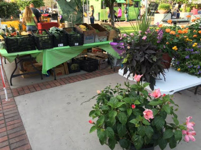 UPDATE: Cinco de Mayo festival at Isaac Conroe Farmer's Market at-a-glance (videos)